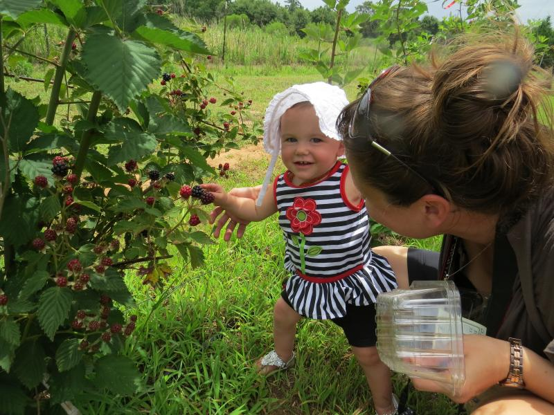 Youngest blackberry picker